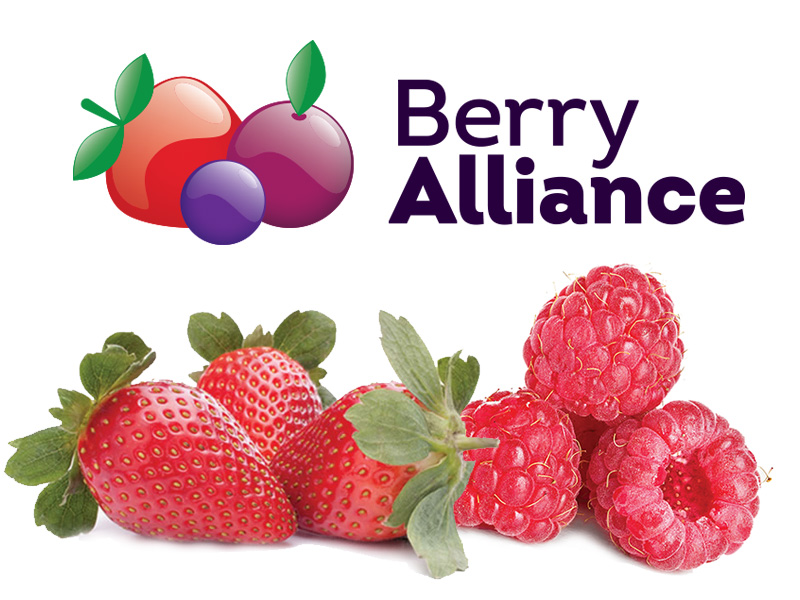 featured_image_berry